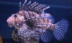 Ученые улучшили технологию слежения за крупными рыбами и анализа морской воды